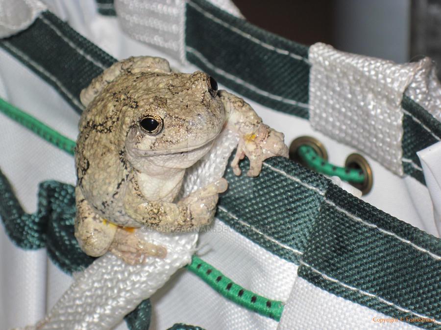 A Tree Frog by Forbearnan