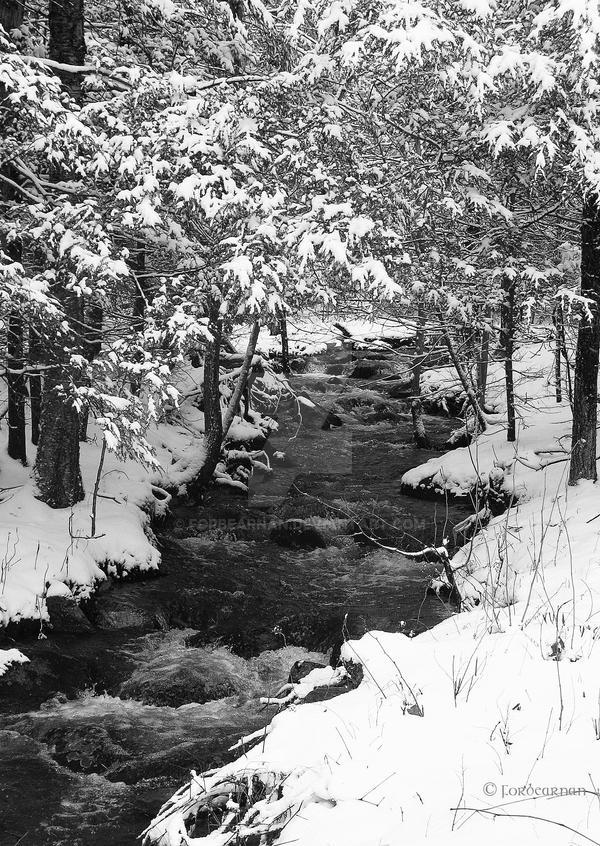 Winter's Chromatics by Forbearnan