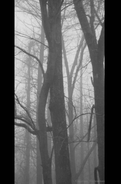 Misty Morning by Forbearnan