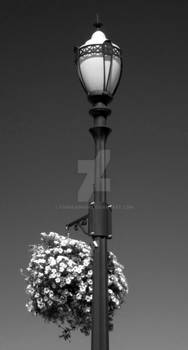 Lamp and Flowers