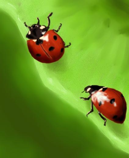 Ladybugs - graphic training by InunekoKyoko