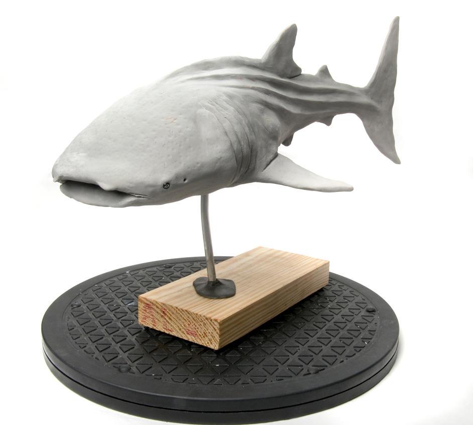Whale Shark Main view WIP by Danwhitedesigns
