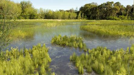 Wetland by Evexoian