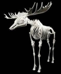 Moose Skeleton by Evexoian