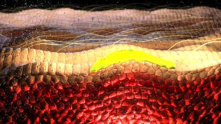 Skin Cross Section by Evexoian