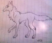 Wolf Drawing by Magikwolf87