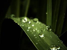rainy morning by DanielGliese