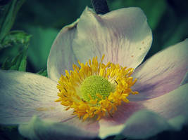 flower flower. by DanielGliese