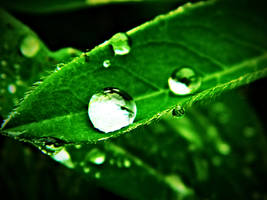 colors - green by DanielGliese
