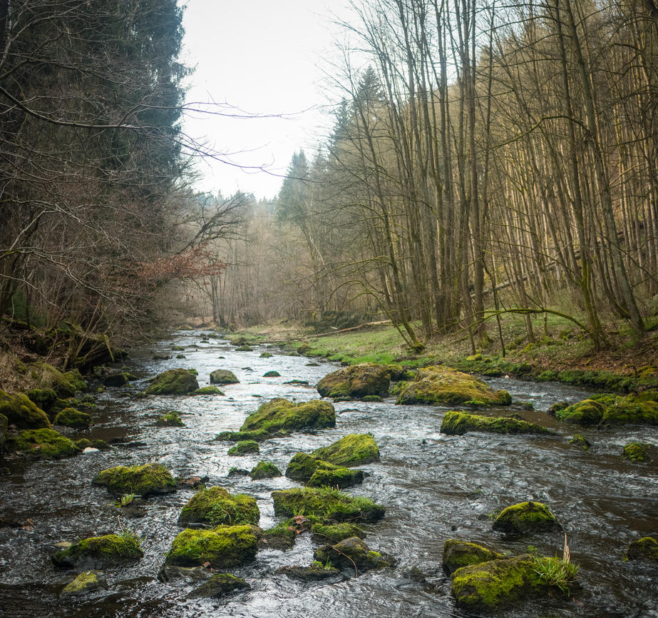 Forest stream 1st by DanielGliese