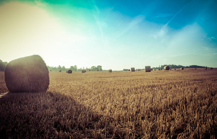 August morning Hay balls by DanielGliese
