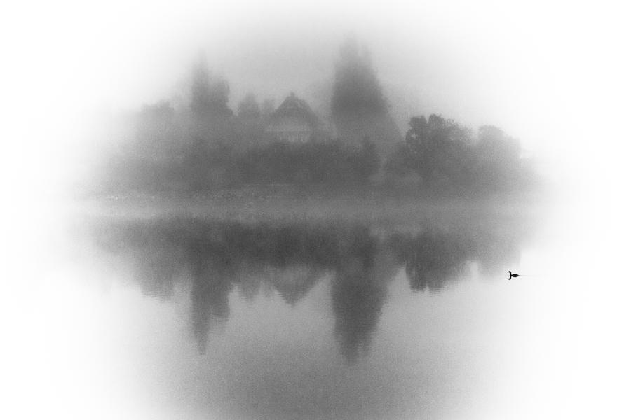 a lonely duck swimming on a foggy morning by DanielGliese