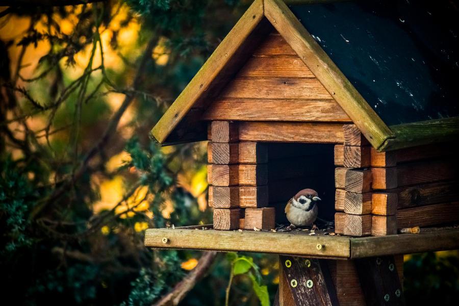 Little birdie by DanielGliese