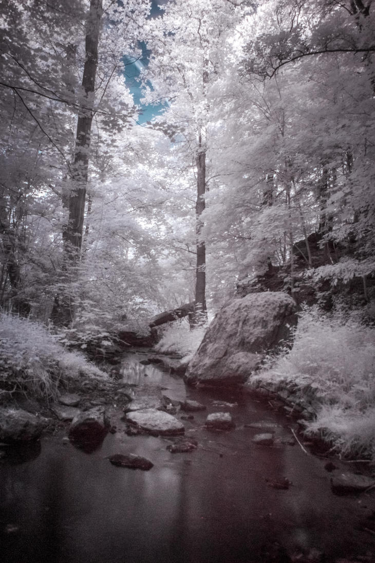 IR - Forest stream by DanielGliese