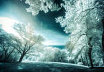Experiments in Infrared - Park reloaded