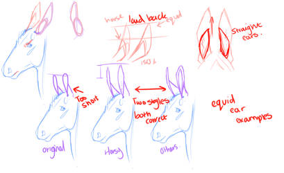 Ear Sketches by horsy1050