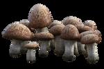 FREE Mushroom Cluster 1, Png Overlay.