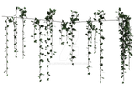 Hanging Ivy 5, Png Overlay.