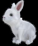 Cute Bunny Rabbit 4 Png Overlay.