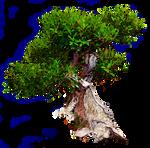 Tree 3 Stock Photo