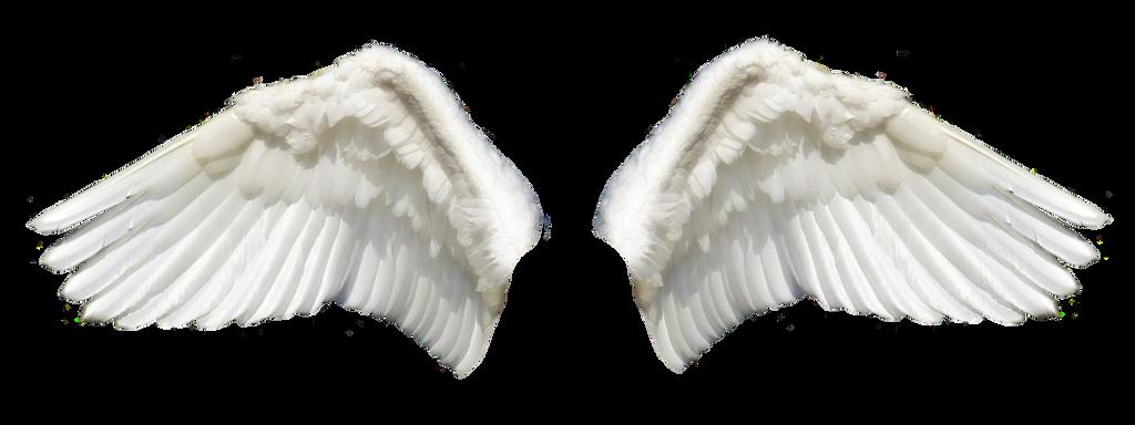 Wings 2 Stock photo