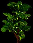 Pflanzen 5 Stock photo