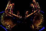 Antlers, Geweih Stock Photo