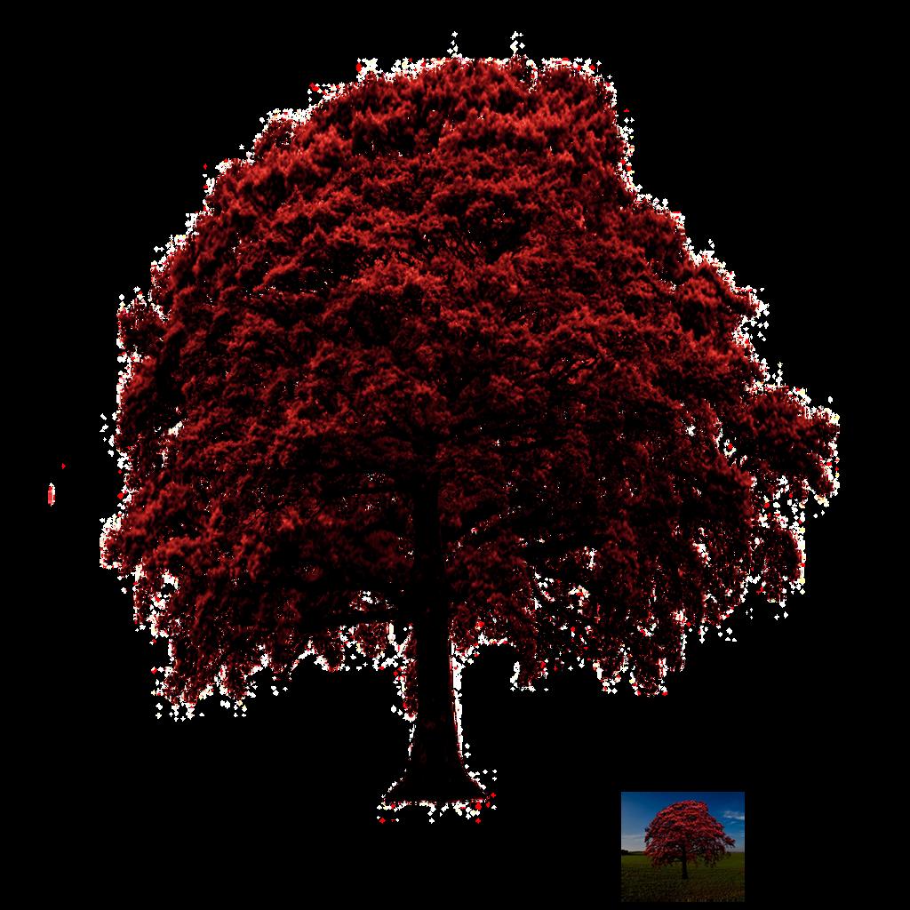 Herbst Tree Stock