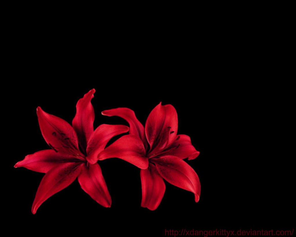 Red Lillies by xdangerkittyx