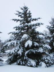 Naked Tannenbaum