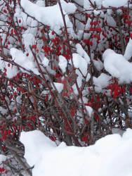 Snow Fruit