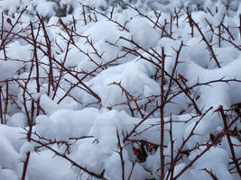 Ravages of Winter