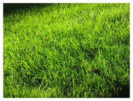 grass by c12ank