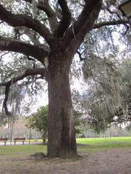 Oak Tree Trunk by graceofbass
