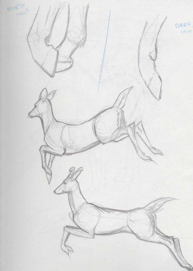 Deer Study by NoirSan