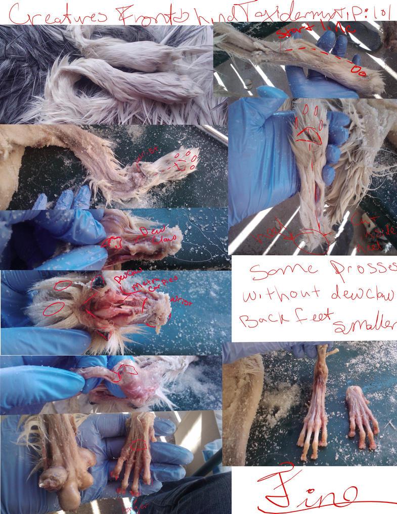 Creatures Taxidermy Tip : Feet by CreatureUndertaker