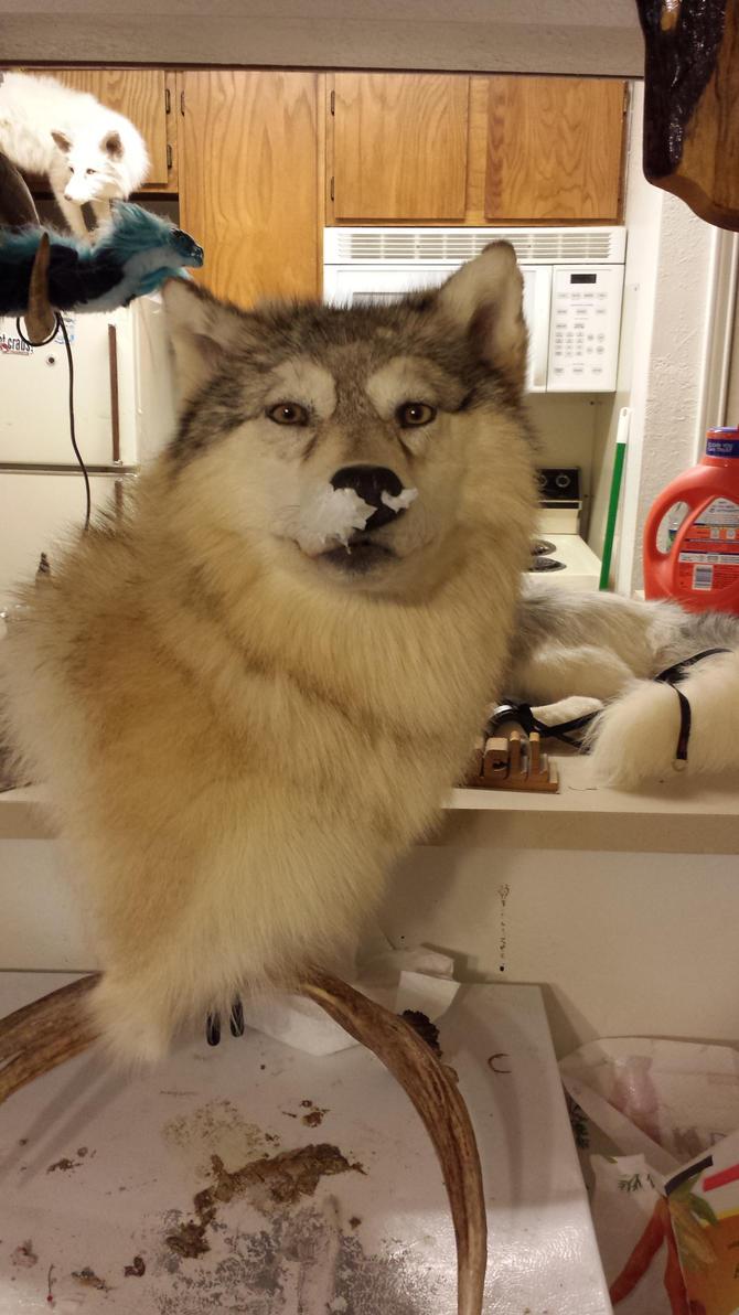ranch wolf pedestal by CreatureUndertaker