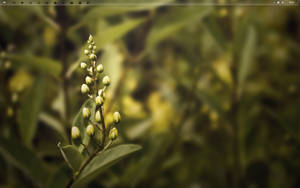 Desktop August '10 by chanq