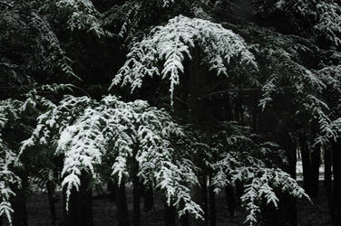 under the snow by amazingVivid