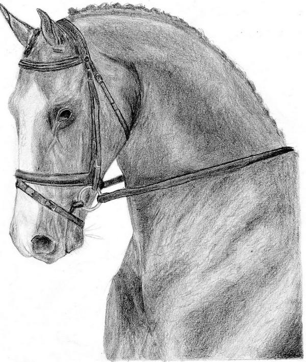 Horse by delizi
