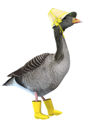 Rainy Goose by unrulywitch
