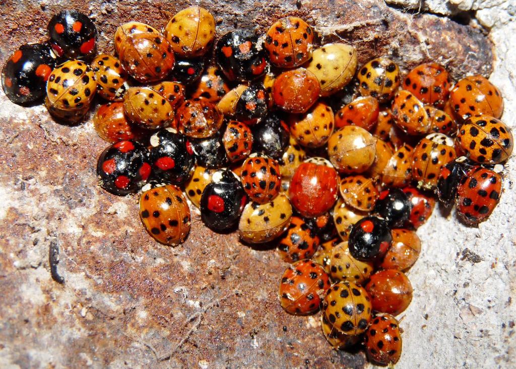 nid de coccinelles nest of ladybirds by photoscrystaljones on deviantart. Black Bedroom Furniture Sets. Home Design Ideas