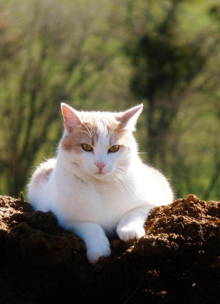 Chat / Cat by PhotosCrystalJones