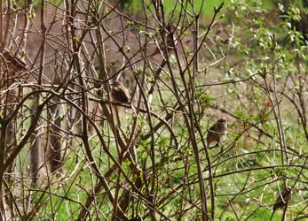 Sparrows by PhotosCrystalJones