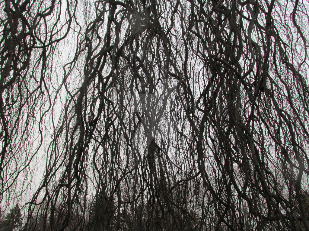 Winter Drear the Weeping Willow in Mount Hope by Android-shooter