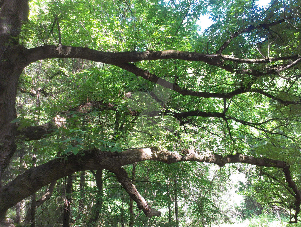 Mass 2: Genesee river trail tree detail by Android-shooter