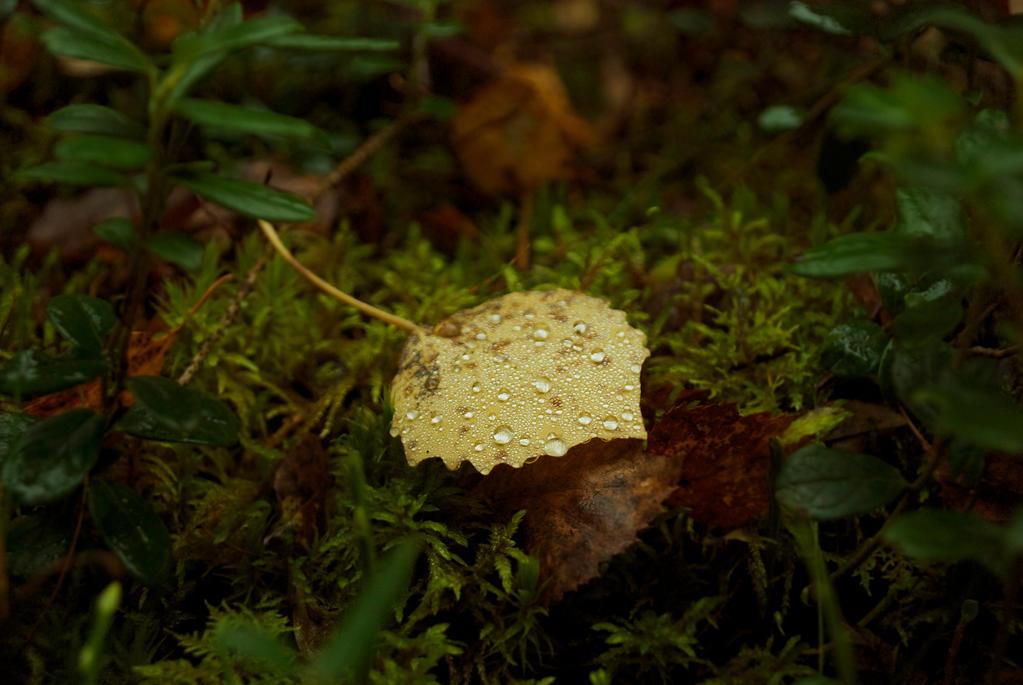 Leaf by Artlie