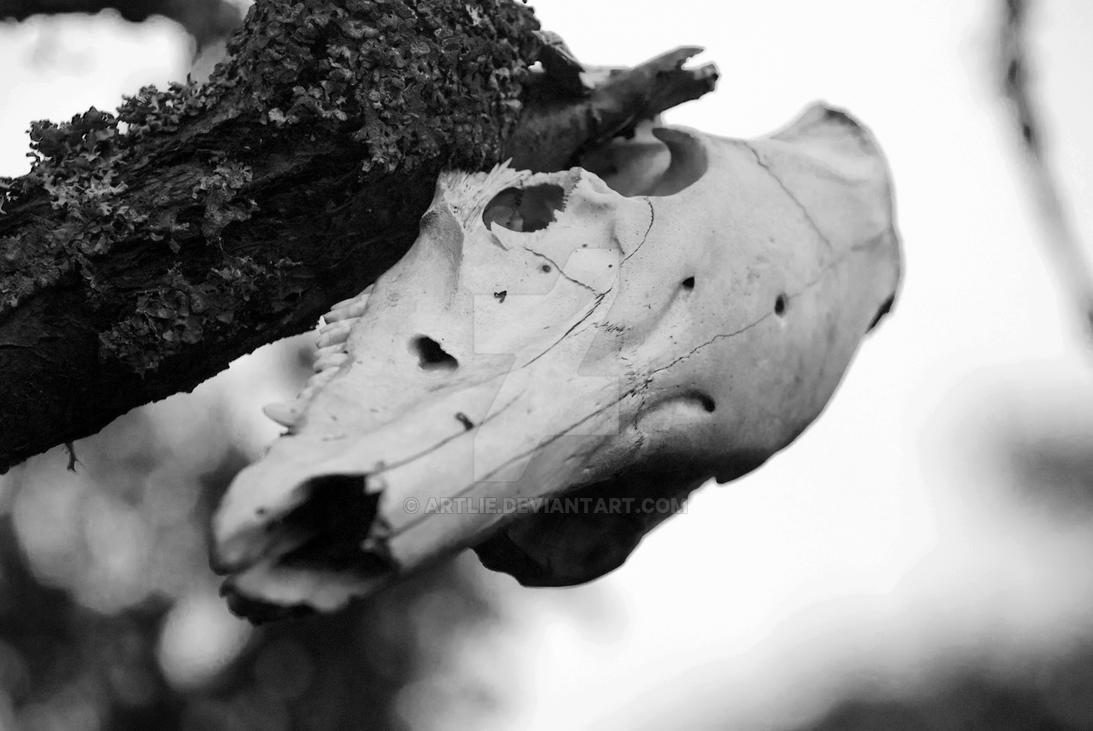 Skull by Artlie