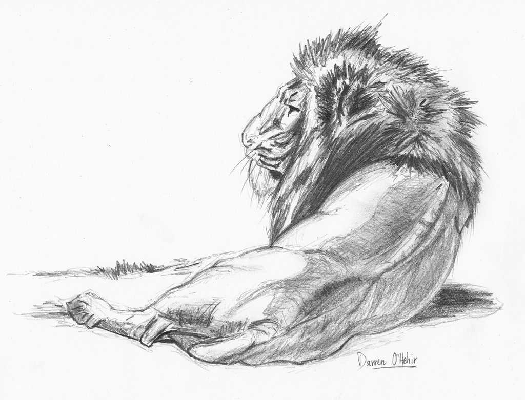 Lion pencil drawing by...