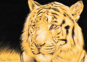 Tiger Drawing on Yellow Paper by darrenOhhh